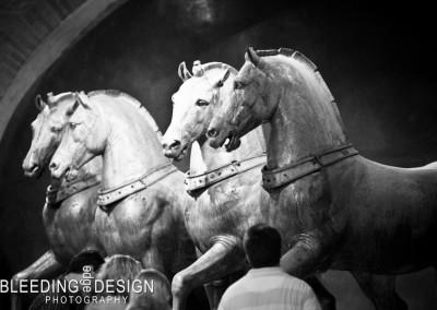 St. Mark's Horses
