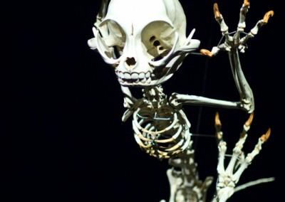 Bienale Skeleton