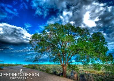 New Mexico Tree