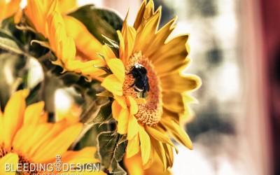 Sunflower Bug