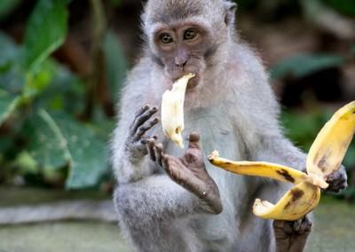 Monkey Cliche